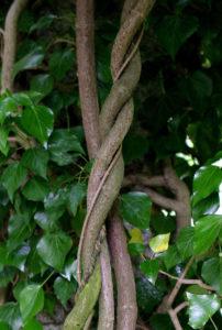 Pflanze im Botanischen Garten (Bild: FAU)