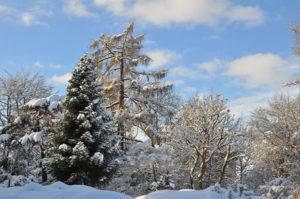 Winterlandschaft (Bild: Walter Welß)