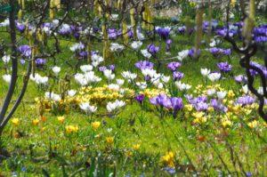 Blumen im Botanischen Garten (Bild: Botanischer Garten, Walter Welß)