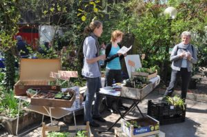 Die Pflanzenbörse im Botanischen Garten (Bild: Dr. Walter Welß)