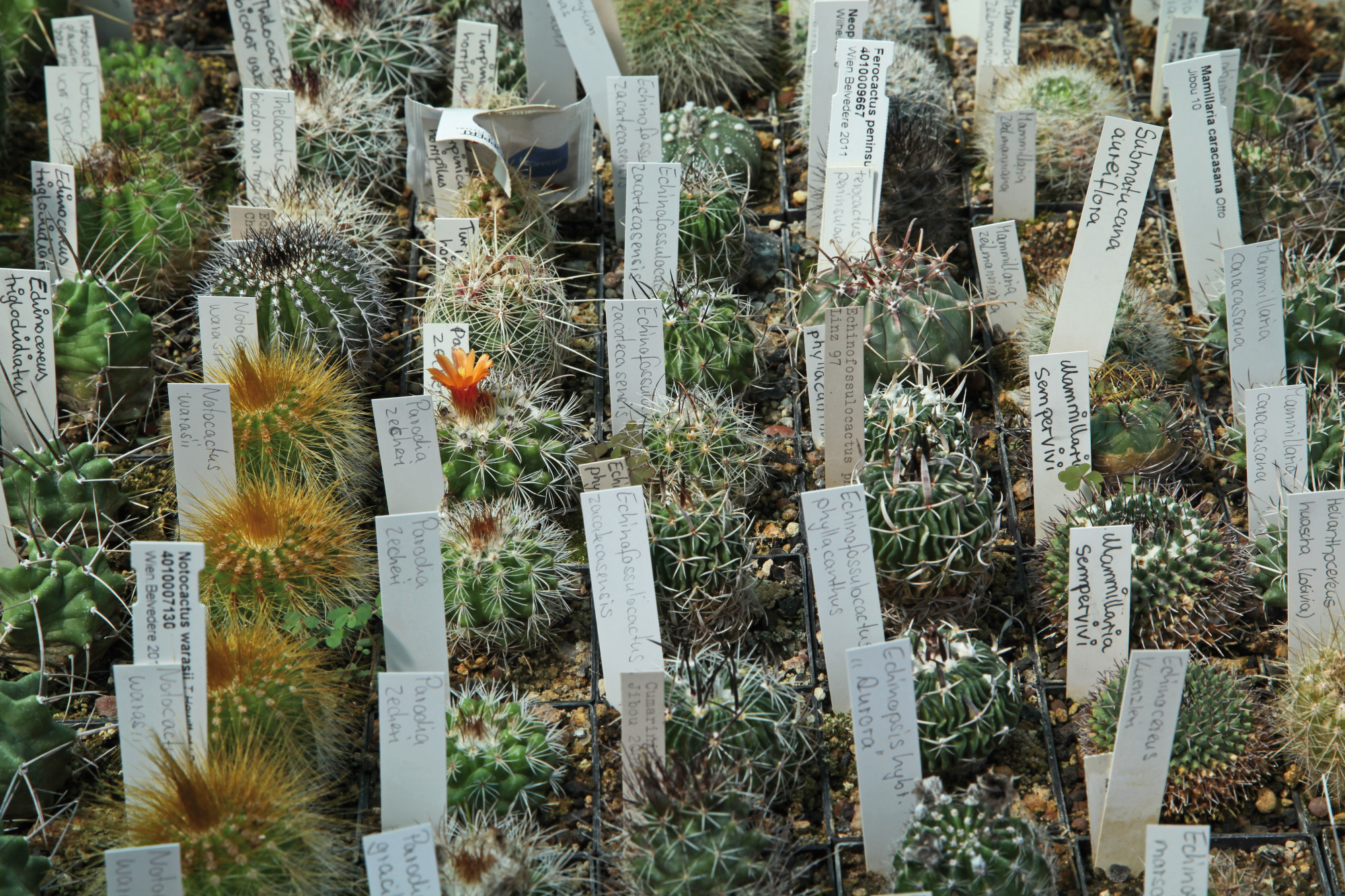 Cactus Collection In The Botanical Garden (image: Georg Pöhlein)