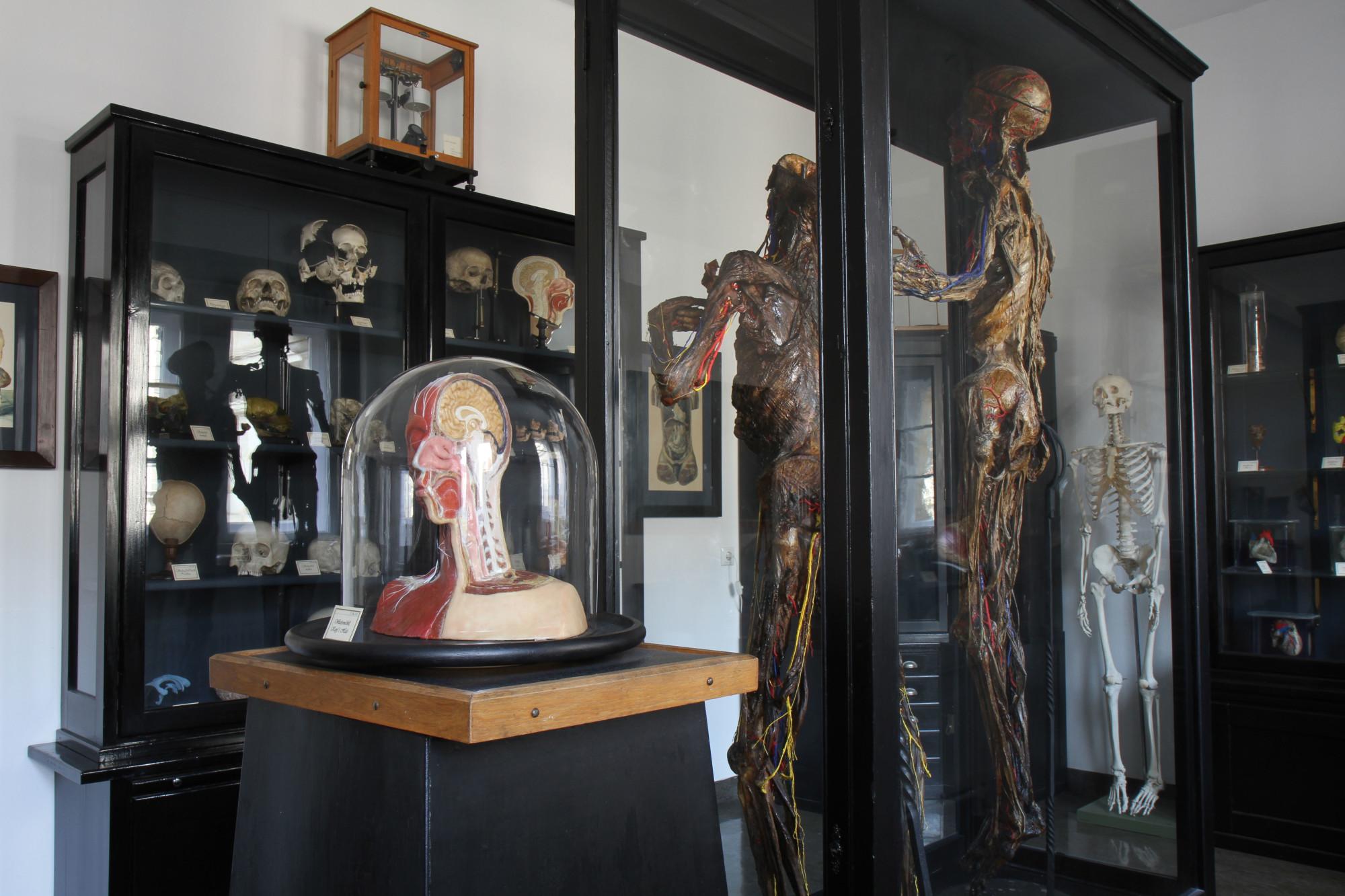 Anatomische Sammlung › Friedrich-Alexander-Universität Erlangen-Nürnberg