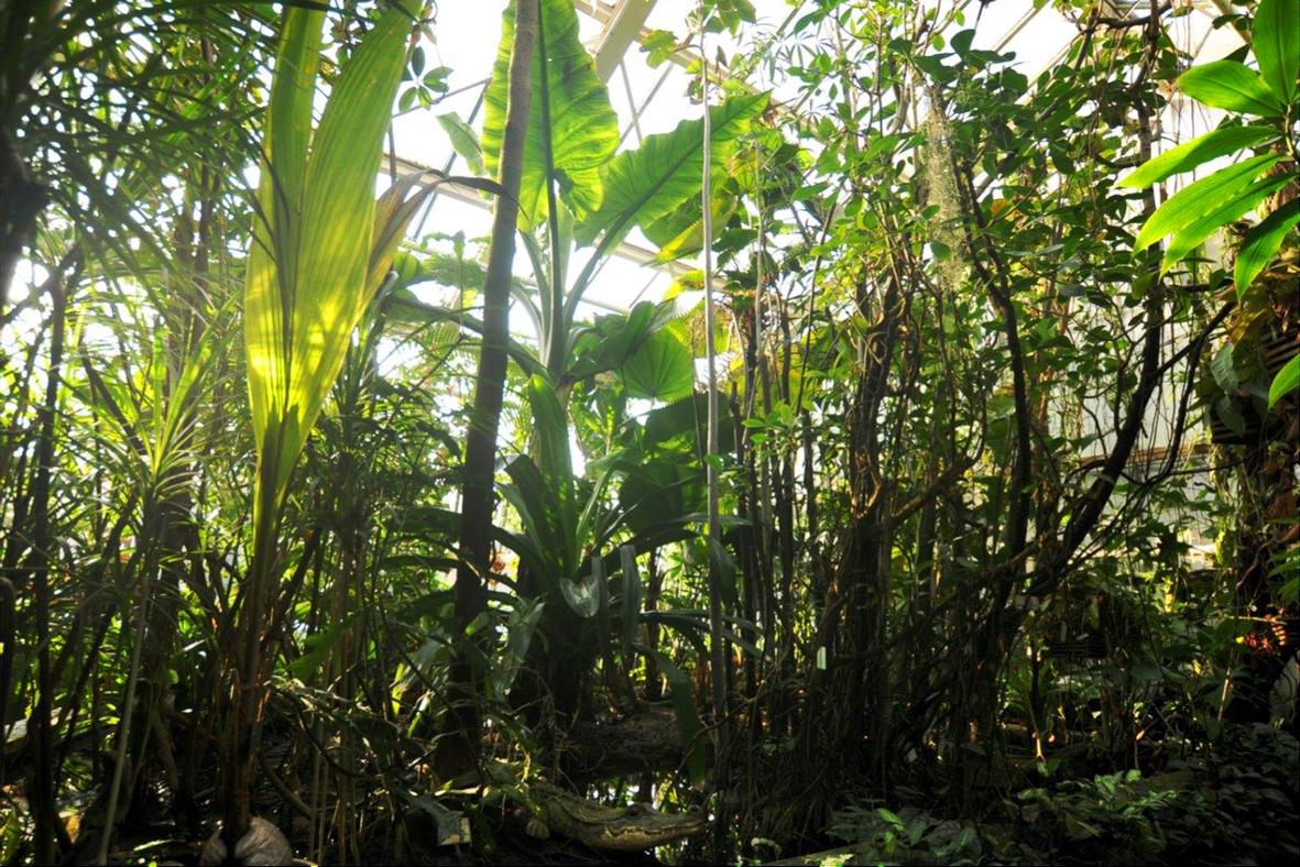 f hrung n hrstoffkreislauf im tropischen regenwald friedrich alexander universit t erlangen. Black Bedroom Furniture Sets. Home Design Ideas