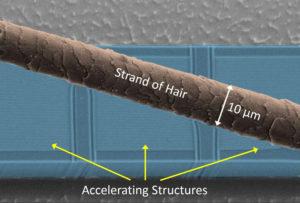 Die Beschleuniger-Struktur im Größenvergleich mit einem einzelnen Haar. (Bild: FAU/Joshua McNeur)