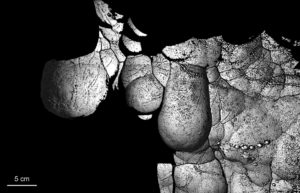 Image from a 3D scan of the cave clouds and lines in the Mäanderhöhle cave. (Image: Andreas Pastoors)