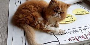Katze sitzt auf Flipchartpapier