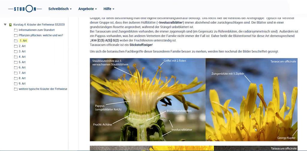 Botanische Fachbegriffe an Löwenzahnfotos