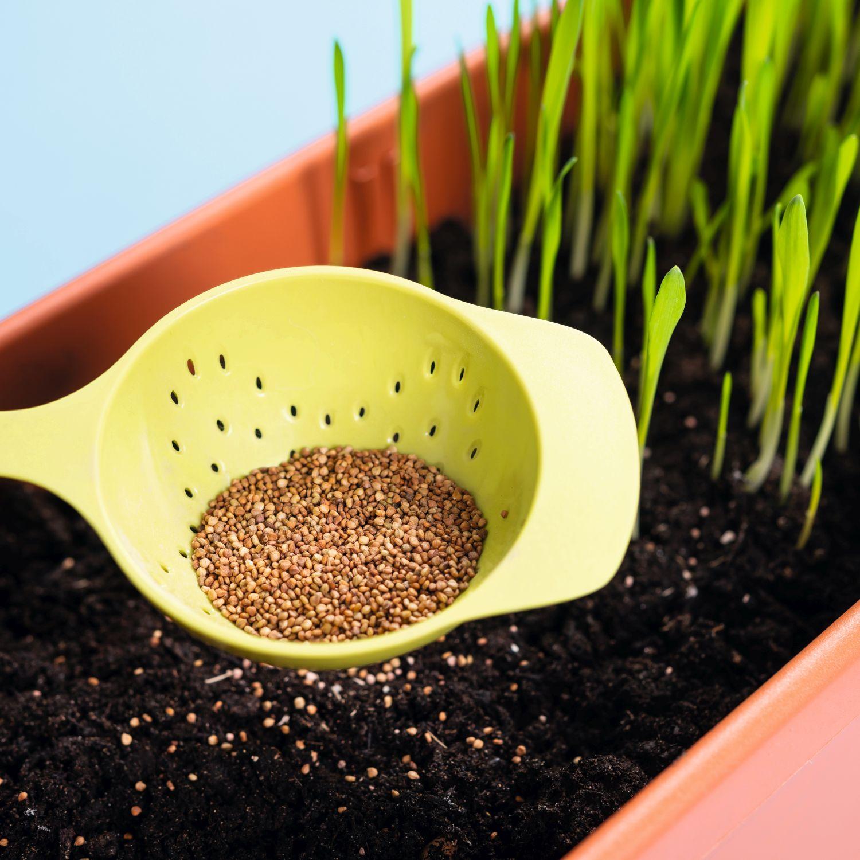 Sieb mit Samen.