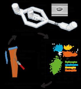 Grafik zur Behandlung von Blutproben, um die physikalischen Eigenschaften von Leukozyten und Erythrozyten zu messen