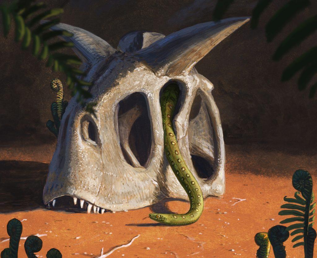 Aus einem Schädel kriecht eine Schlange